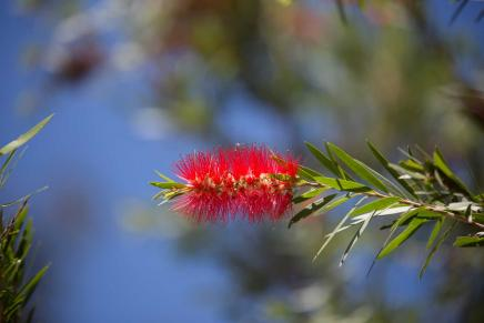 GE6A1989 BottleBrush like herb web